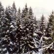 Pădurile, mult râvnite
