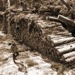 Exploatare forestieră