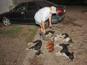 Scene de groază cu câini morţi, miercuri seara, pe strada Petru Rareş din Suceava