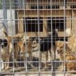 Adăpostul de câini al Sucevei ar putea fi preluat în administrare de o asociaţie de protecţie a animalelor din Germania