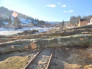 Lemnele depuse pe traseul căii ferate au blocat drumul Mocăniței