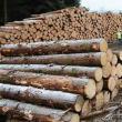 Material lemnos fără acte de provenienţă, confiscat de poliţişti