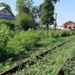 """Linia de cale ferată a fost scoasă la """"lumină"""" din vegetaţia abundentă. Foto: Facebook - Calea ferată Dorneşti-Putna"""
