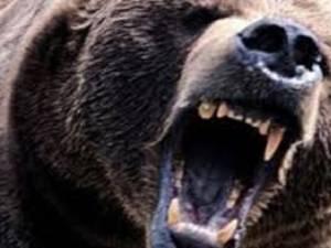 Cu gâtul şi mandibula sfârtecate de un urs, un bărbat de 79 de ani, din Bogdăneşti, a fost salvat de medicii din Fălticeni şi Suceava