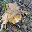 Rezultat surprinzător al controlului Gărzii Forestiere la ocolul silvic privat unde s-a petrecut agresiunea asupra lui Tiberiu Boșutar și a doi jurnaliști