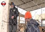 Administrarea adăpostului de câini al Sucevei va fi făcută de municipalitate cu un grup de voluntari din Germania