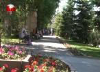Campanie de dezinsecţie pe spaţiile verzi din Suceava